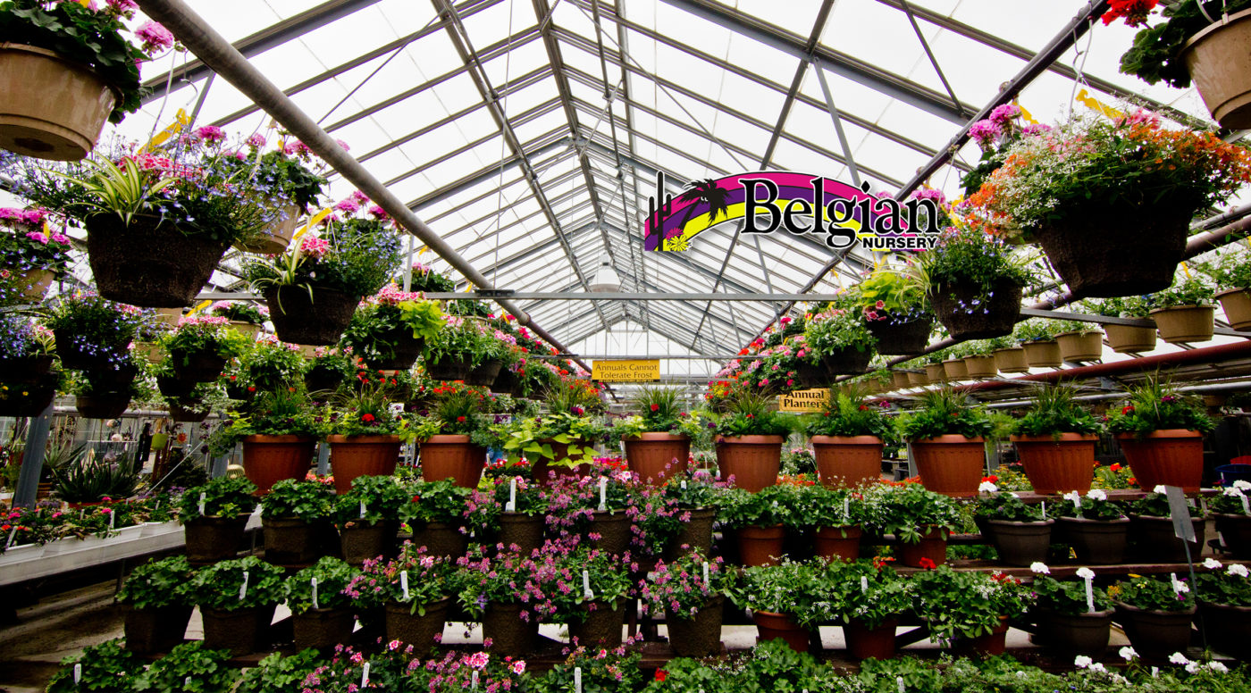 Home Page Belgian Nursery