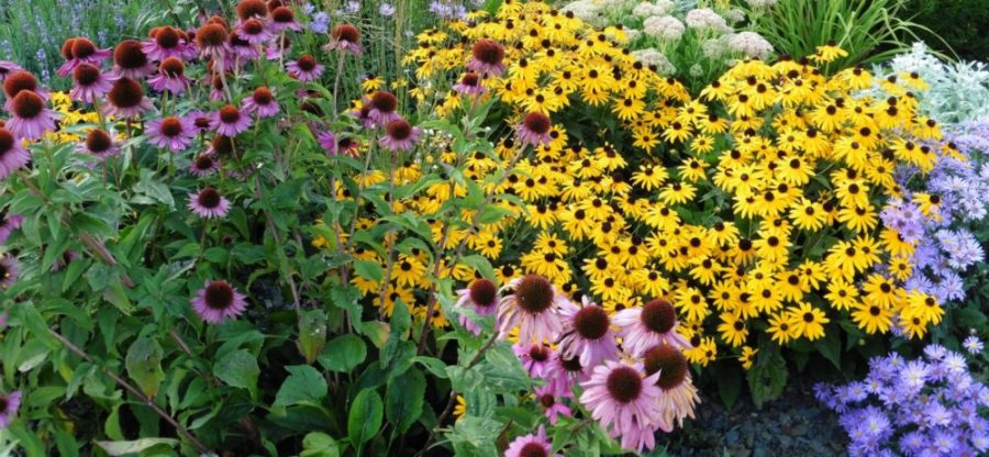 Blog – planting a bee friendly